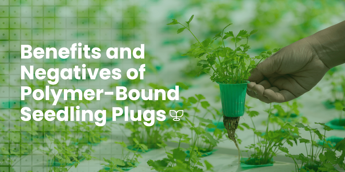 Benefits and Negatives Of Polymer-Bound Seedling Plugs