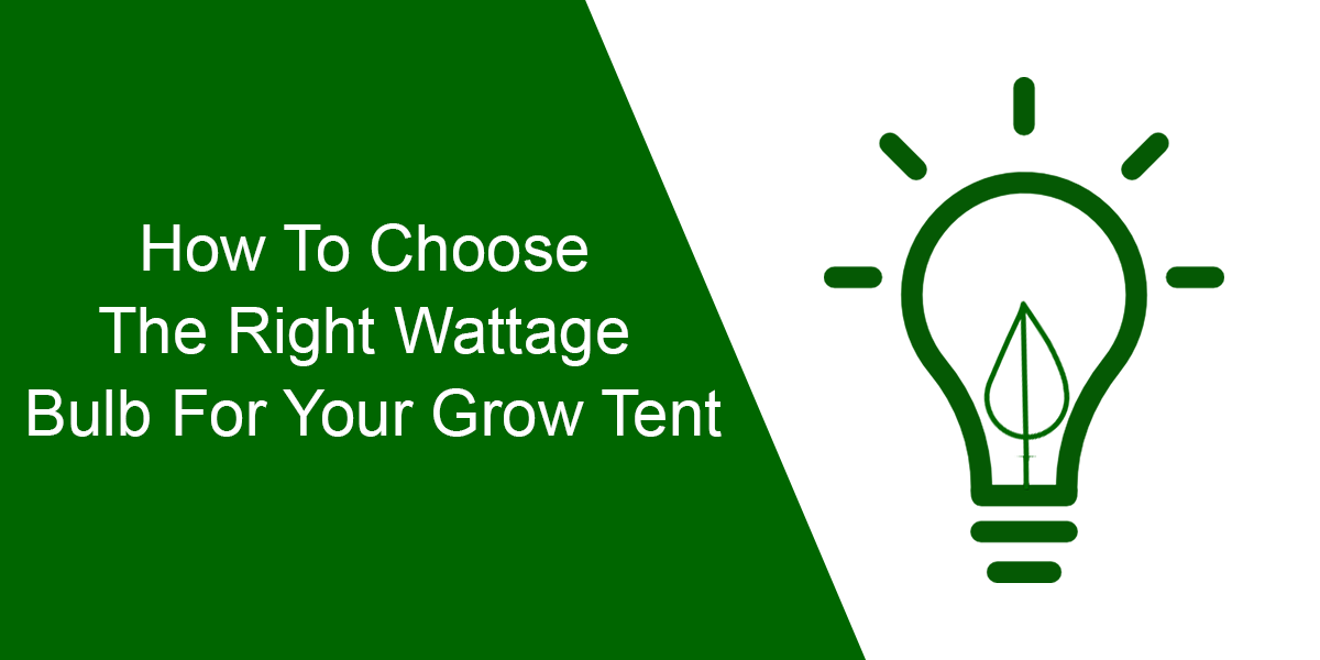 How To Choose The Right Wattage Bulb For Your Grow Tent