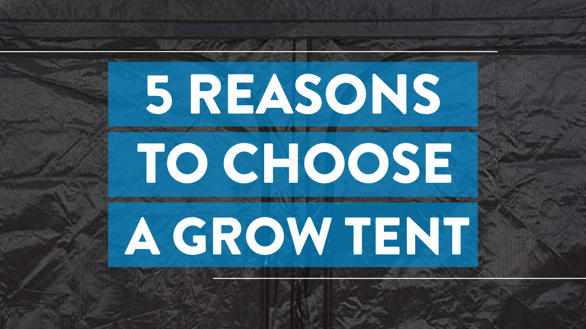 Image is a black grow text with the words 5 Reasons To Choose A Grow Tent written white on a blue background