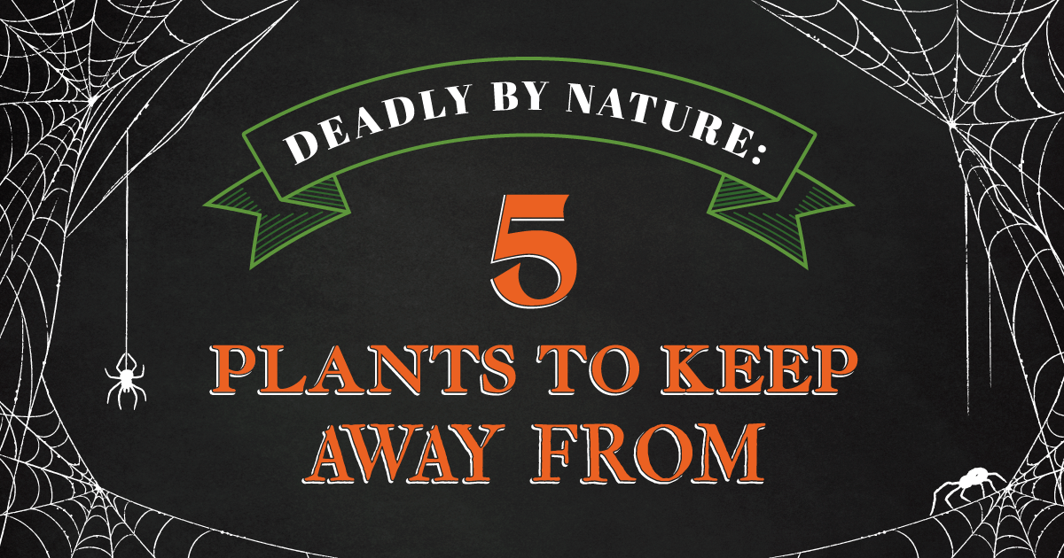 Deadly by Nature: 5 Plants to Keep Away From